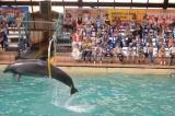 Обучающиеся посетили ростовский дельфинарий